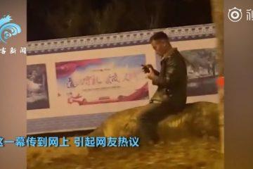 男子半夜街頭騎豬玩手機(視頻)