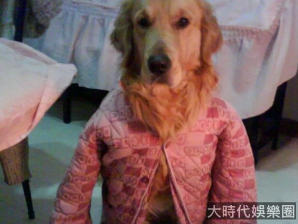 為什麼全天下父母都喜歡給寵物套衣服?