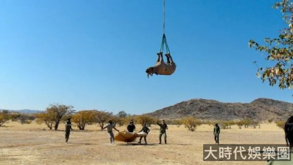 為什麼運輸犀牛,一定要把犀牛倒吊在飛機下面?