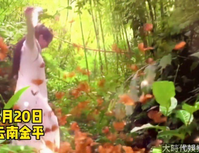 63歲楊麗萍山谷與蝴蝶共舞,卻遭網友批破壞生態